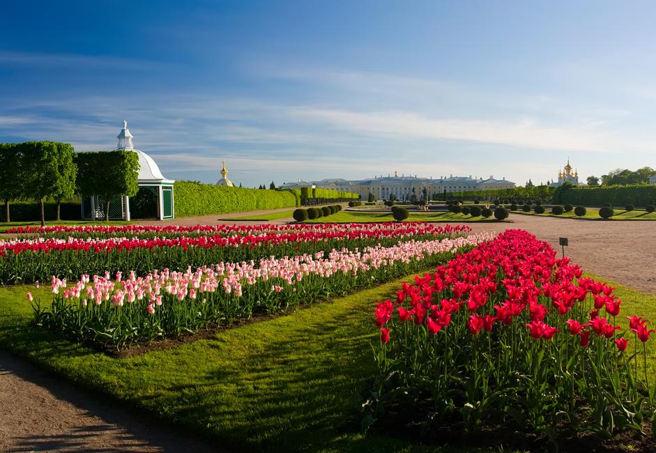 サンクトペテルブルク大学の2つのキャンパスのうちの1つがこの街に所在し、他にもロシア製時計製造会社の大手であるペトロド ヴォレツの時計工場がある。ピョートル1世の命によって建造され、時に「ロシアのベルサイユ」と呼ばれる一連の宮殿や庭園もここにある。サンク トペテルブルク中心部と合わせて、この一連の宮殿は、ユネスコの世界遺産に登録されている。