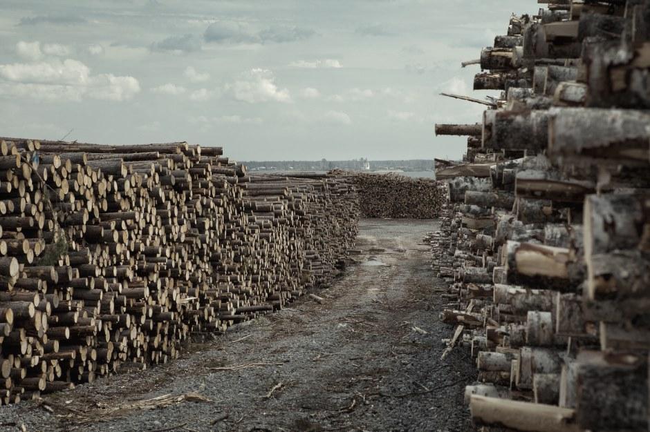 ベロゼリエ内のすべての町の暖房は薪によって賄われ続けている。シェクスナ川のほとりでは薪には事欠かない。
