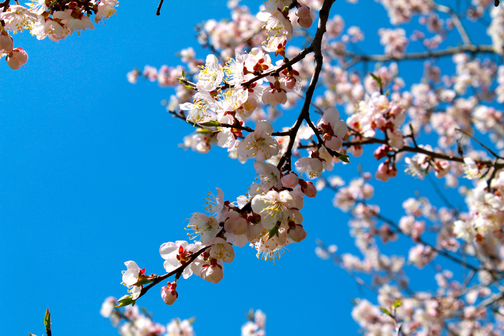 日本庭園では、桜、ツツジ、カエデ、ハルニレなど、100種類以上が育てられている。