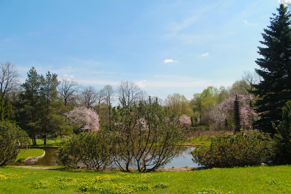 庭園では、北海道から運ばれた桜が約250本育っている。