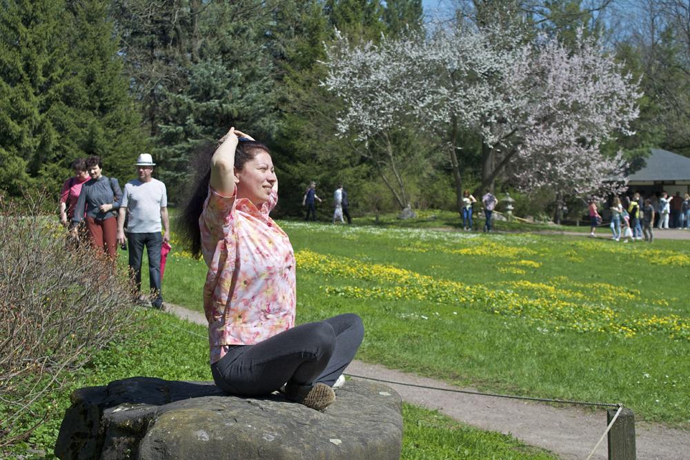 ロシアの中央気候帯で多くの品種がその美しい姿を見せることができないでいる中、エゾヤマ桜とチシマ桜のみが越冬し、花を咲かせて訪れる人を喜ばせている。