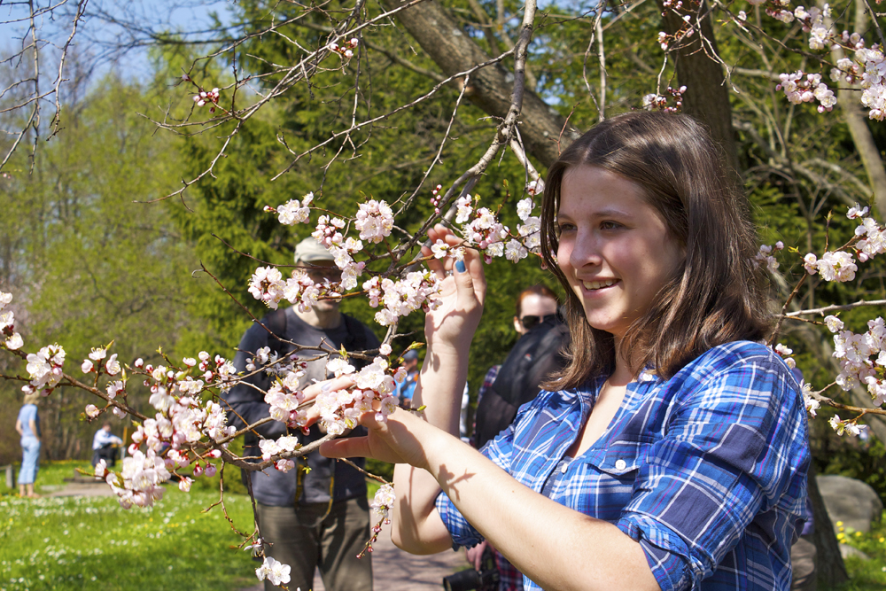 植物園の従業員が若い桜の木を丁寧に管理する。薬草園では、さまざまな春の花が順番に咲いていく4月末から6月末までの期間、花フェスティバルが行われる。