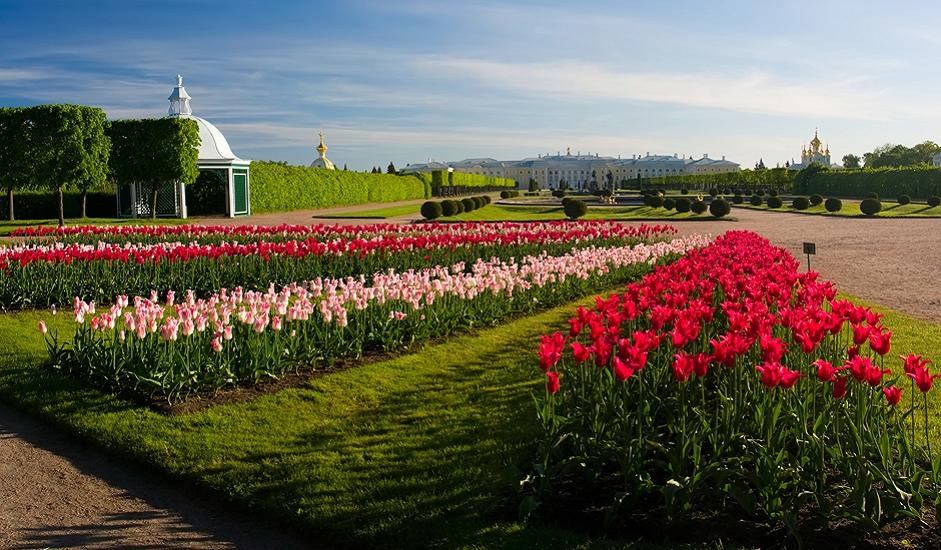 """U gradu su smještena dva studentska naselja Sanktpeterburškog državnog sveučilišta, kao i jedan od vodećih ruskih proizvođača satova, Petrodvorecka tvornica satova. Tu se nalazi velik broj dvoraca i parkova, nekada poznatih kao """"ruski Versailles"""", izgrađen po naređenju Petra I. Ovaj niz palača, uz gradski je centar uvršten na spisak Svjetske kulturne baštine UNESCO-a."""