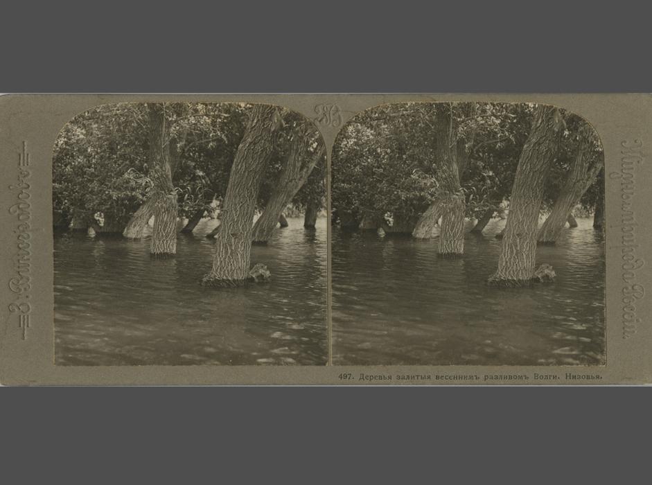 その中でも特に特徴的なのは、ロシア人写真家ザハール・ヴィノグラドフによる立体写真シリーズだ。彼はロシア帝国各地への数多くの探検に出かけ、高度に詳細な写真を撮影したが、その多くは立体写真カメラで撮られたものである。//ザハール・ヴィノグラドフ、「ロシアの生活と自然:ヴォルガ川とヴォルガ流域」シリーズに所収の、ヴォルガ川の春の洪水によって氾濫した木々」、1913 年、銀塩印画紙