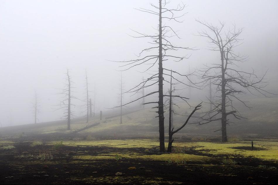 Le volcan Plosky Tolbatchik peut se vanter de son cratère de 3 kilomètres ; il est entouré de forêts mortes, détruites par plusieurs éruptions dévastatrices.