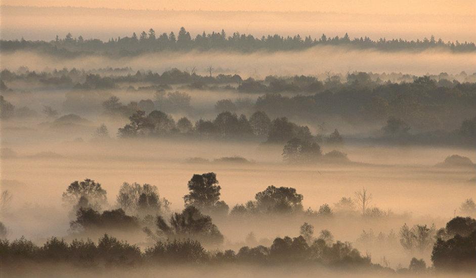 """Brjanska šuma / Države prirodni rezervat biosfere """"Brjanska šuma"""" nalazi se u Brjanskoj oblasti. Prostire se na površini od 121.000 km². Nalazi se na popisu rezervata biosfere UNESCO-a. Najbliži grad je Trubčevsk."""