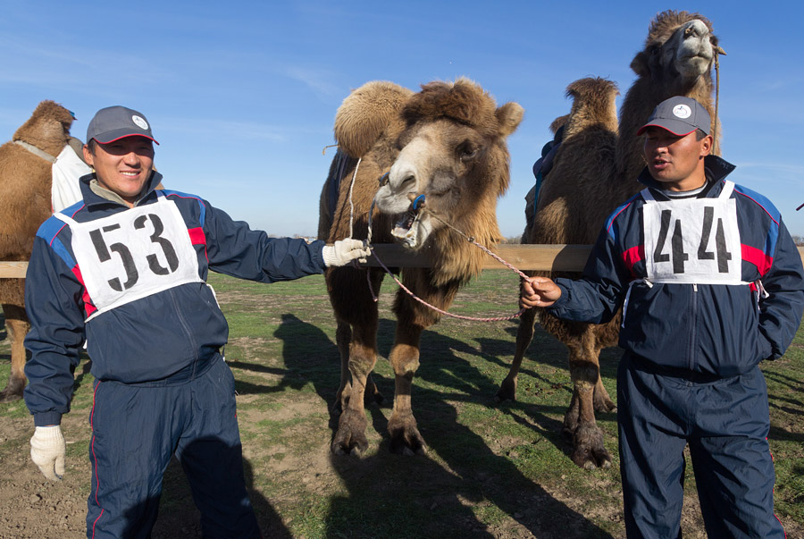 ラクダレースは古来より家畜繁殖家の間で有名である。ロシアでカルムイク・バクトリア・ラクダが最も多く繁殖されている場所はアストラハン州である。現在、この種のラクダは4600頭いる。