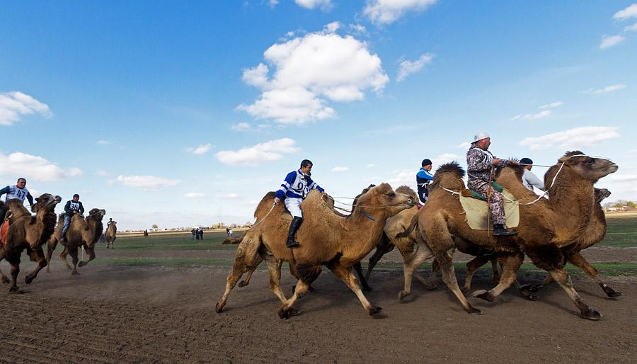 ラクダの乳はシュバトという発酵乳製品を作る為に使われる。地元の人々に人気があるこの飲み物は、栄養価が高く、様々な効能がある。