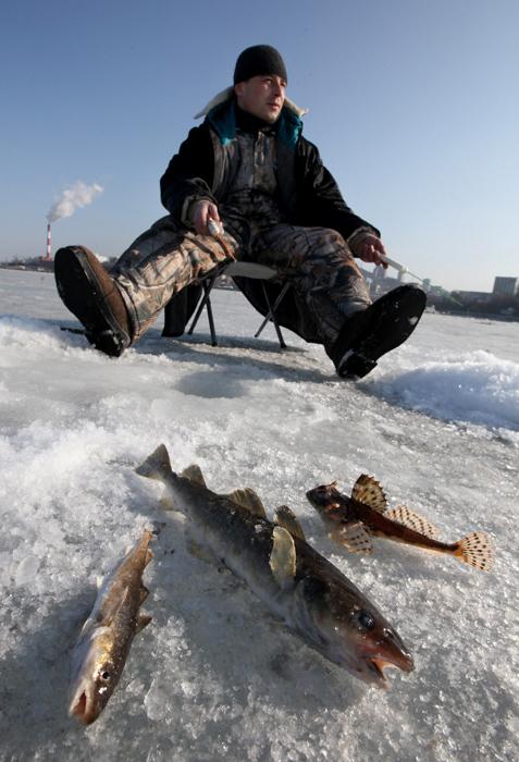 あらゆる困難が立ちはだかるにもかかわらず、経験豊富で忍耐強い釣り人なら、必ずパーチ、カワカマス、ローチ、ウグイなどを捕まえることができる。これらの魚はときどき、酸素と食物がより豊富な環境を求めて動き回ることがある。