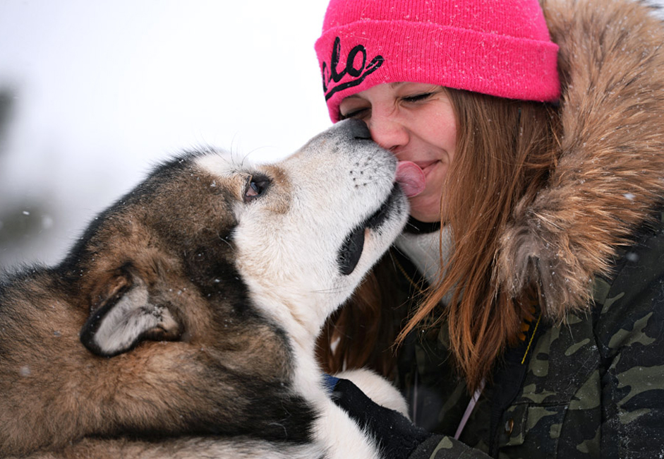 "Dog with its owner waiting to start the dog sled ""Christmas Race - 2014"" at the Fir ridge ski complex in the Novosibirsk region."