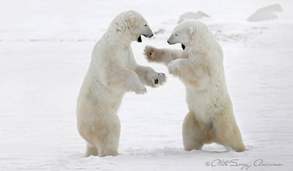 1/15. Арктик је у својој лепоти истовремено величанствен, хладан, неосвојив, привлачан и застрашујући.