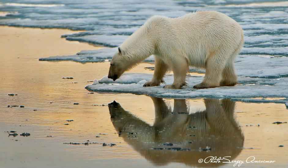 3/15. Због свих ових разлога, екосистем данашњег Арктика је најосетљивији на свету. Очување животне средине важно је за све нас, јер је у директној вези са климом планете.