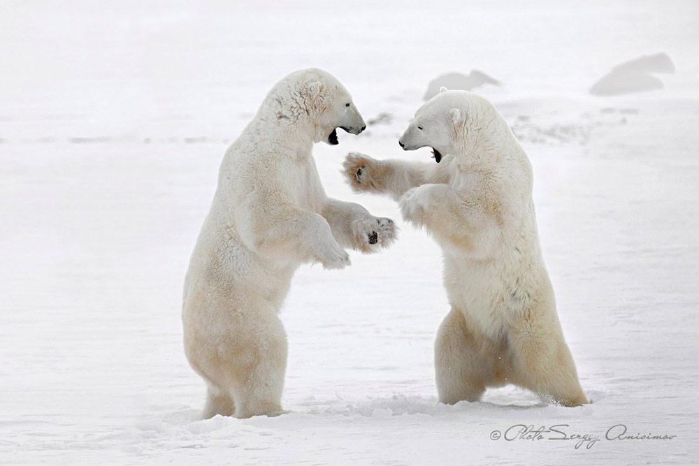 L'Arctique est un univers à la fois majestueux, froid, insaisissable, enchanteur et à la splendeur terrifiante.