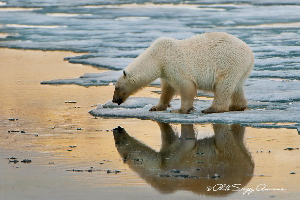 Tout cela fait de l'Arctique l'un des écosystèmes les plus fragiles au monde. Ses problèmes environnementaux sont d'ordre mondial, et affectent le climat de la planète entière.