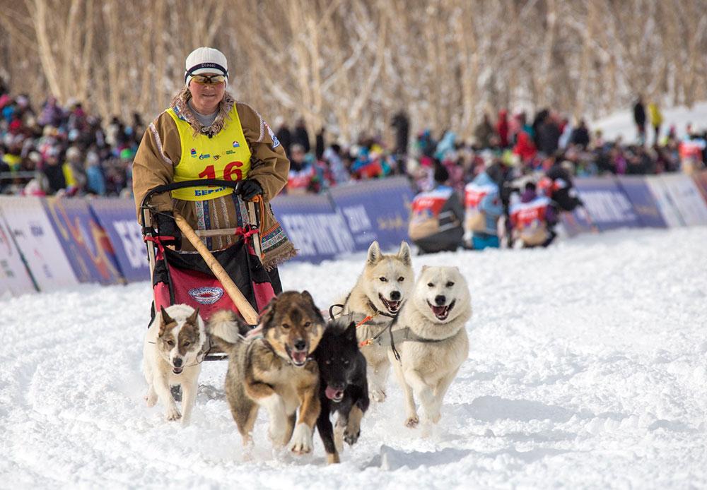 Beringia adalah ajang balap kereta luncur anjing tradisional. Beringia dengan rute terpanjang di Eurasia diselenggarakan di Semenanjung Kamchatka, Rusia. Kompetisi tersebut diikuti oleh 15 musher, pengendara transportasi yang dihela oleh anjing (mushing) yang mengadu kekuatan, keberanian dan daya tahan mereka. Ada tiga musher perempuan yang turut serta dalam perlombaan kali ini.Para musher  mengemudikan anjing-anjing yang dilatih untuk menarik kereta luncur yang panjang dan sempit. Mereka harus menaklukkan jarak 1.300 kilometer dari kota Petropavlovsk, Kamchatsky ke desa Tilichiki, Olyutorsky.Kompetisi dimulai sejak 3 Maret lalu dan masih berlangsung hingga sekarang. Peserta masih harus menempuh jarak 357 kilometer untuk menyelesaikan pertandingan.