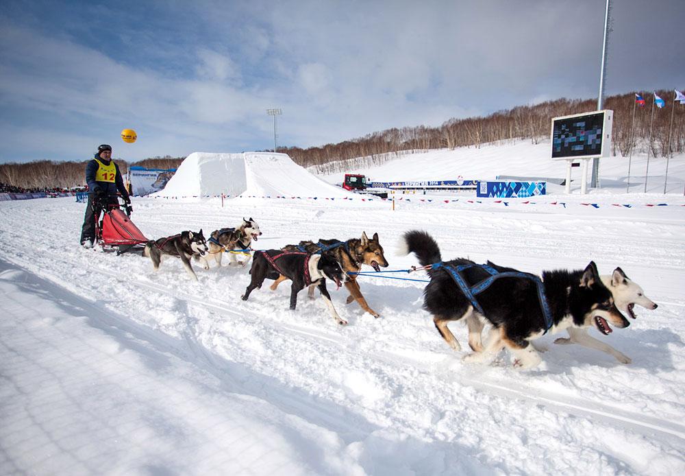 Pada 1991, Beringia masuk Guinness Book of Records sebagai balap kereta luncur anjing terjauh di dunia. Namun, sejak itu ajang ini kehilangan status tersebut karena jaraknya diperpendek.