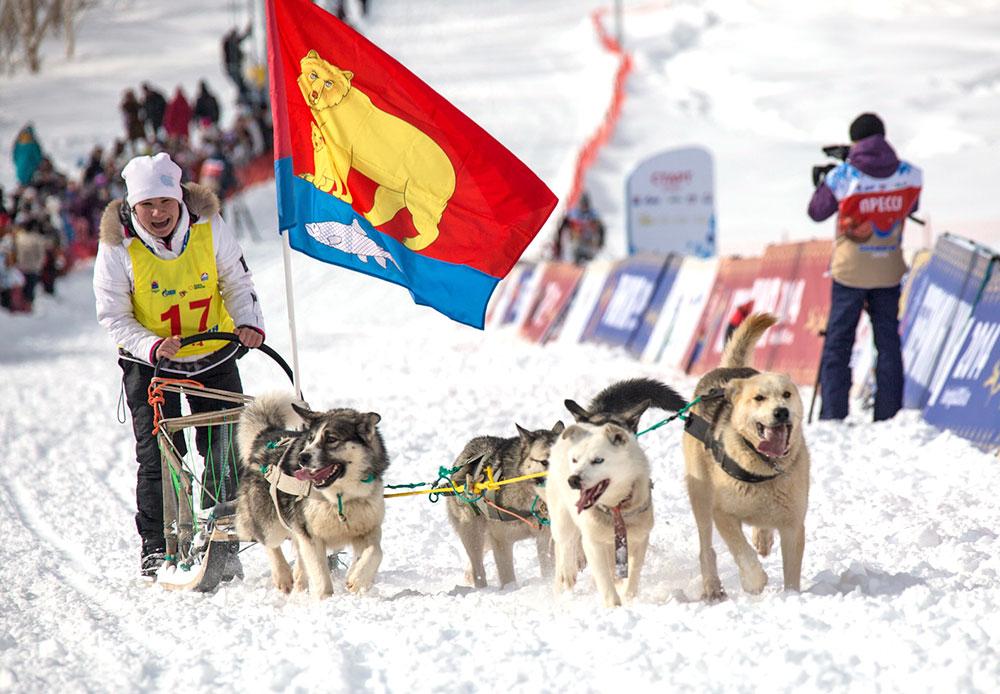 Penyelenggara lomba kemudian memutuskan untuk kembali menjadikan Beringia sebagai balap kereta luncur anjing terjauh di dunia. Pada 2014, para musher harus melintasi jarak 1.300 kilometer dan pada 2015 jarak yang harus ditempuh musher mencapai lebih dari 2.000 kilometer.