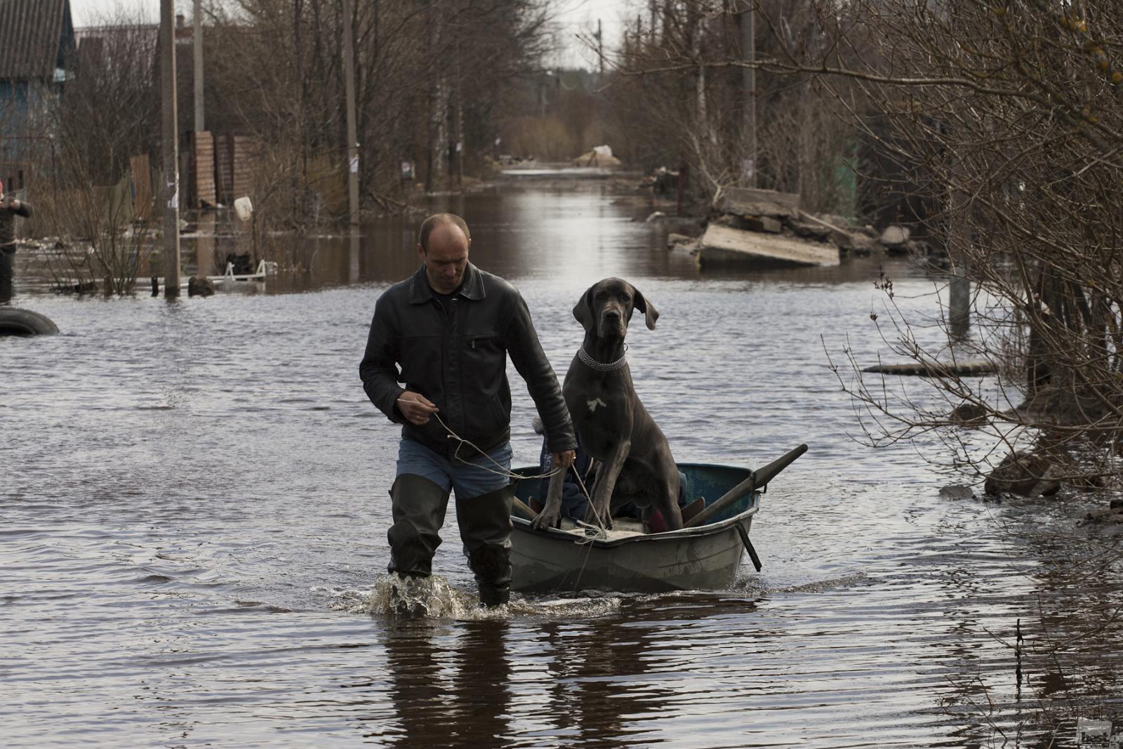 春の洪水の中、荷物と犬を運ぶ地元の人。レニングラード州、トスノ。