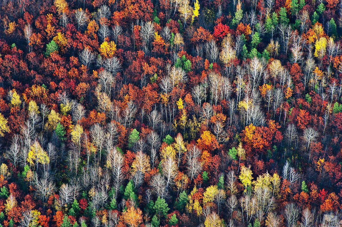 Ein Wald im Herbst, aufgenommen aus einer Höhe von 1000 Metern, Gebiet Woronesch