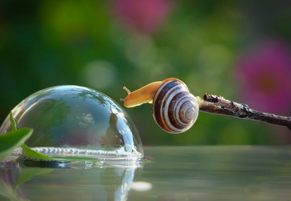 Photographer Vyacheslav Mishchenko shows that there are almost no differences between us and snails. His photos are like illustrations for a kind-hearted children's book about bugs in which some funny little snails explore the forest, overcoming mushrooms of mountainous proportions (at least for them) and daring to gaze upon their own reflection in streams and lakes.