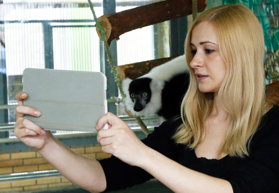 A zoo employee takes a self portrait with a lemur on a tablet computer at the Royev Ruchey zoo in Krasnoyarsk, Siberia. Zoo employees take pictures of various animals and show it to the primates to help their development and provide variety in their life at the zoo.