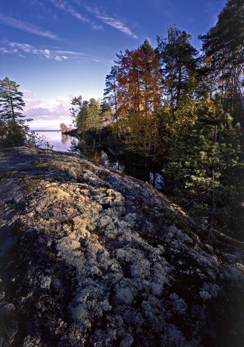 長いキャリアを通して、彼は自然と調和しようと努めた。彼はしばしば一人で森の中で暮らす事があった。彼は自分の目で見たものを撮影し、誰でも見る事の出来る写真にした。 //写真:カレリアの秋 1984年