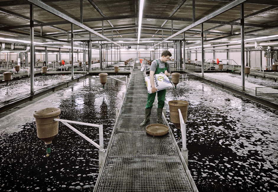 Do sredine 1980-ih, Sovjetski Savez je kontinuirano bio broj jedan u svijetu u industrijskoj proizvodnji jesetre. U Kaspijskom moru lovilo se i do 28 tona jesetre, i proizvodilo 2,5000 tona crnog kavijara. Ta količina pokrivala je 90% svjetskog tržišta kavijara. U praksi, Sovjetski Savez je gotovo imao monopol na izvoz kavijara jesetre.