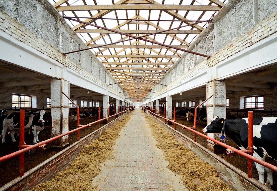 Предузеће Ирмен налази се у селу Верх-Ирмен, у Новосибирској области. Ова компанија бави се производњом сточне хране, млека и меса. Половина укупне реализације Ирмена отпада на пласман млека, док месо и сточна храна учествују са по 16% у укупном резултату.