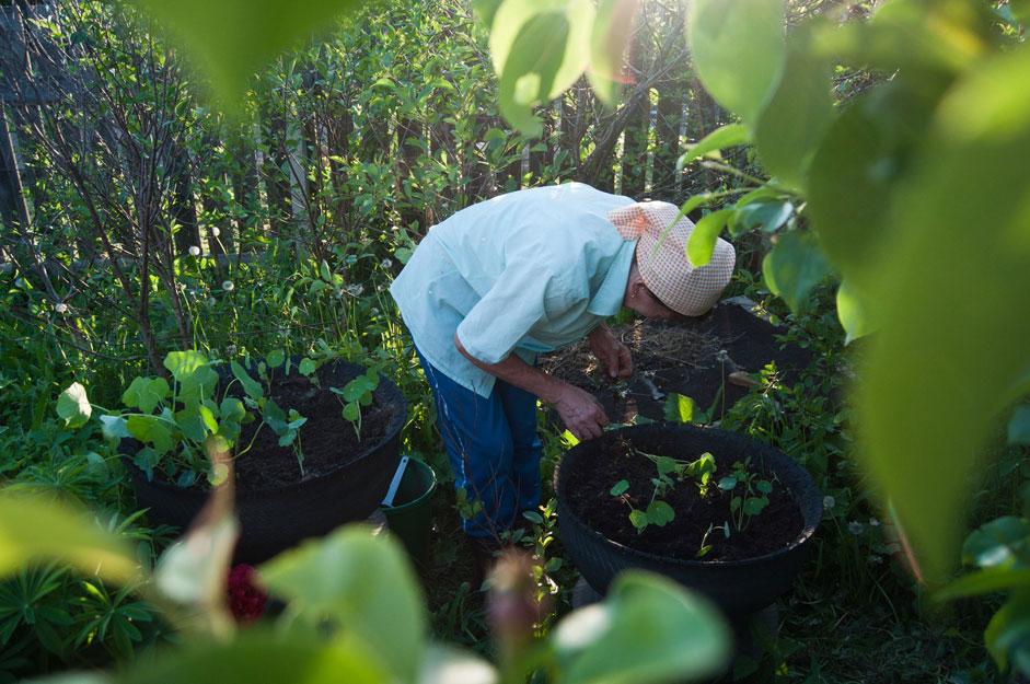 ダーチャではどんなことをすればいいのだろう?筋金入りのダーチャ愛好家なら、そのような質問を思いつくことはまずない。多世代にわたるロシア人にとっては、家庭菜園と園芸が人気の娯楽だ。夏になると、ほとんどの人が自らの労働の果実(もちろん野菜やハーブも)を満喫することを好むが、それはおいしいうえに、環境にも優しい。