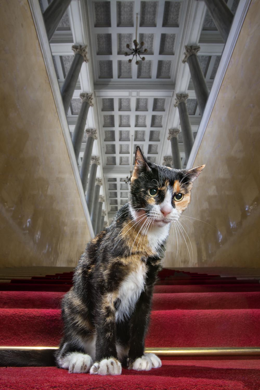 Le premier est Assol, perché sur l'escalier de Nicolas Ier. Cette demoiselle est certes timide, mais aussi sociable et pimpante. Le soir, on peut souvent la voir sur le Quai du Palais, à contempler pensivement les bateaux qui glissent sur la Néva.