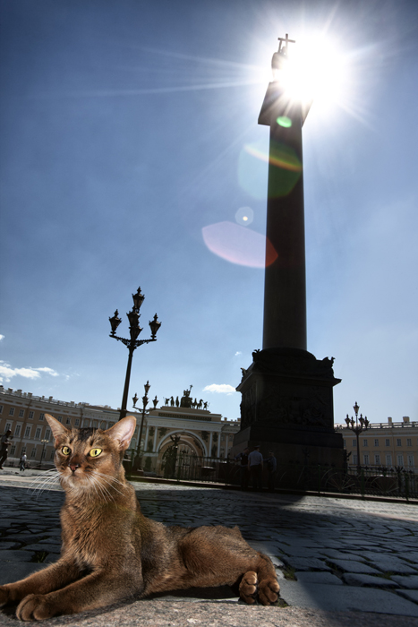 Rio-Rita, the Alexander Column. A graceful, expressive, and unusually melodious cat of a wild Abyssinian hue. In anticipation of human caresses, her body becomes like a bouncing ball, with her tail and hind legs performing a kind of dance. When she rubs up against your legs, resistance is futile.