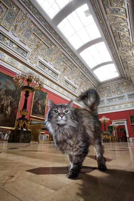 Tikhon, dans la Grande Verrière italienne. Méticuleux et très discret, Tikhon le vieux briscard porte le nom du dieu païen de la destinée. Comme un signe du destin, Tikhon a déménagé de l'État-Major vers le Grand Ermitage, où il est devenu le chef tacite de tous les chats du palais.