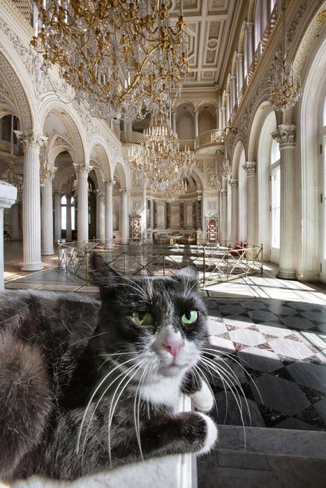 Pingva, dans le Hall du Pavillon. Cette chatte âgée à l'austère robe noire et blanche est un véritable matou de palais. Elle est, sans conteste, née pour garder l'Ermitage. Sa livrée sobre en noir et blanc, témoigne de ses origines aristocratiques. Elle dédaigne la compagnie de ses congénères à moustache et préfère la solitude, vivant à l'écart des autres félins à la chatterie.