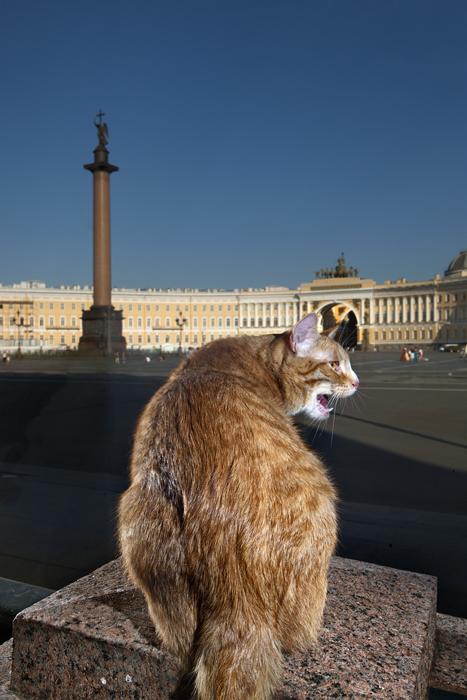 Gauguin, na Praça do Palácio, edifício do Estado-Maior. Este gato de cores vivas parece ter saído de uma tela do próprio pintor francês. As angústias da vida desenvolveram nele as habilidades mais extraordinárias. Gauguin sabe muito bem onde os sortimentos são estocados e como obtê-los, usando sua capacidade de abrir (e fechar!) qualquer porta
