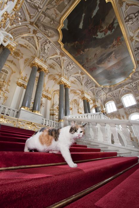 Francesca, na Escadaria Jordan. Orgulhosa do nome que carrega, esta gata realiza a sua própria versão das árias da ópera homônima pelas abóbadas do museu na calada da noite. Qualquer um que acaricie o seu revestimento tricromático recebe tratamento especial