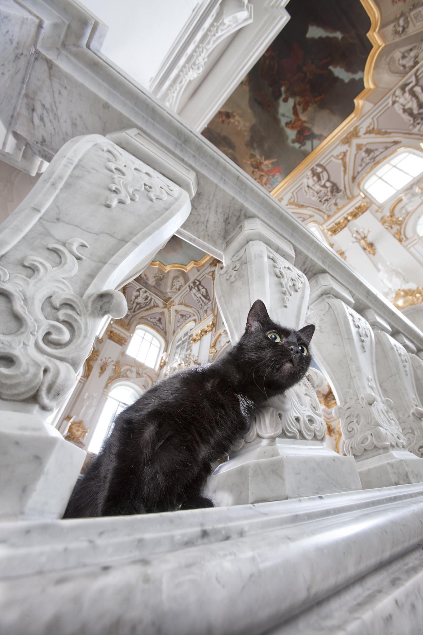 Vaksa, sur l'escalier du Jourdain. La discrète Vaksa est dotée d'une mauvaise vue, elle n'aime pas spécialement les étrangers, et quitte rarement l'Ermitage. Ici, elle a toujours de quoi faire : en se frottant affectueusement contre les jambes des employés, ce chat presque noir cire leurs chaussures depuis de longues années.