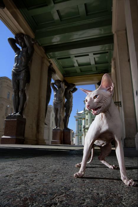 """Duquesa, em frente à Atlante (coluna). Durante as Noites Brancas, algumas exposições realmente ganham vida! As estatuetas geladas e taciturnas de gatos egípcios transformam-se em """"calorosas esfinges"""""""