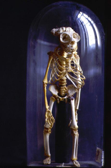 ルイシュの胎児の標本以外にも、同じくオランダ人の薬理学者、アルベルト・セーバのコレクションがある。クンストカメラについてきいたセーバは、ピョートル大帝に自身の哺乳類、鳥類、魚、蛇、爬虫類や貝のコレクションを売った。