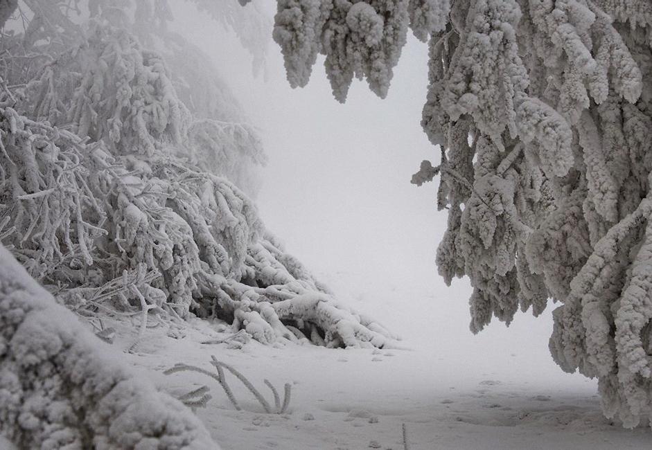 """""""Šetnja uz obalu"""". Injem prekriveno drveće zabilježeno okom kamere tijekom ledenog dana na obalama Jeniseja kod Krasnojarska. S rijeke se neprestano dizala izmaglica i bilo je potrebno dosta strpljenja da bi fotografija uspjela."""