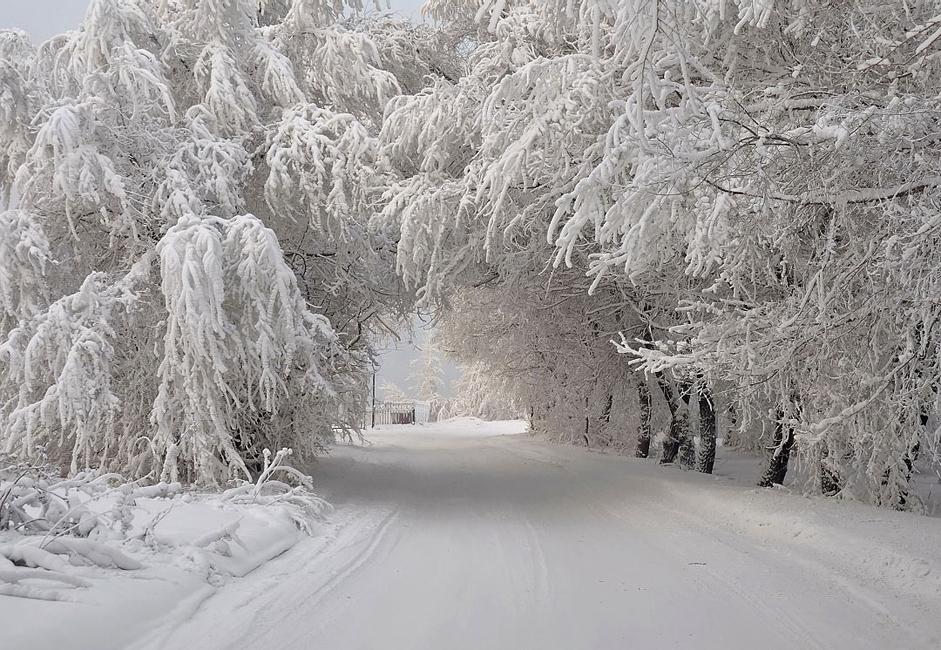 """""""Zimski svod"""". Snimljeno na obalama Jeniseja po velikoj hladnoći. Drveće ovdje blista u svim vremenskim uvjetima."""