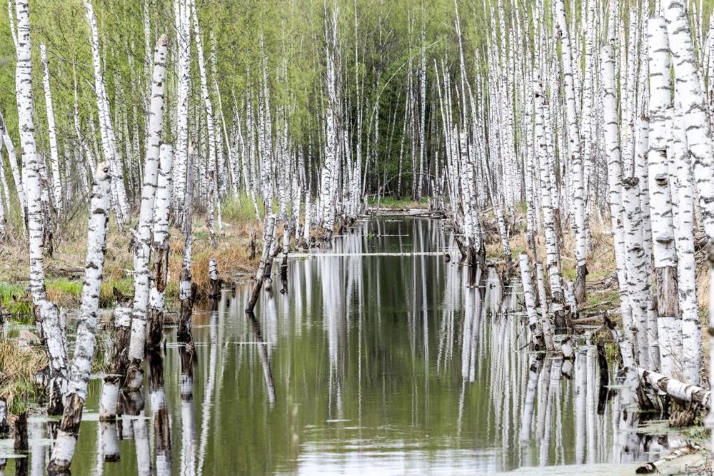 Água espelha paisagem circundante em riacho na região de Ivánovo