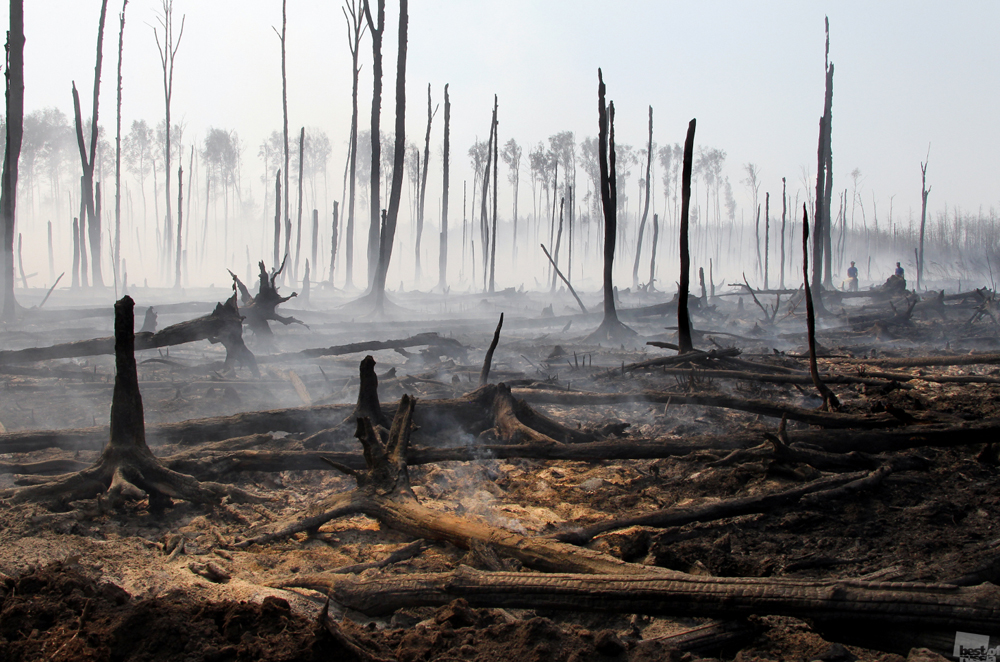 Incêndio em floresta na região de Tver