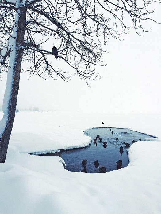 Našao sam podatak u vodiču da se zimi može prijeći jezero do manastira Iver, koje je udaljeno samo 3 km od mjesta. No jednom na jezeru shvatio sam da je to nemoguća misija - pred nama se prostiralo potpuno bijelo platno snijega i neba.