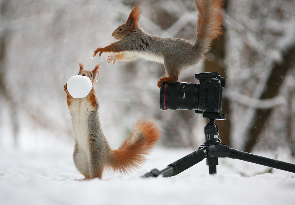 Two squirrels frolic like naughty children — climbing everywhere, falling down and doing it all over again. Hard to imagine what kind of photos you can find on that camera.