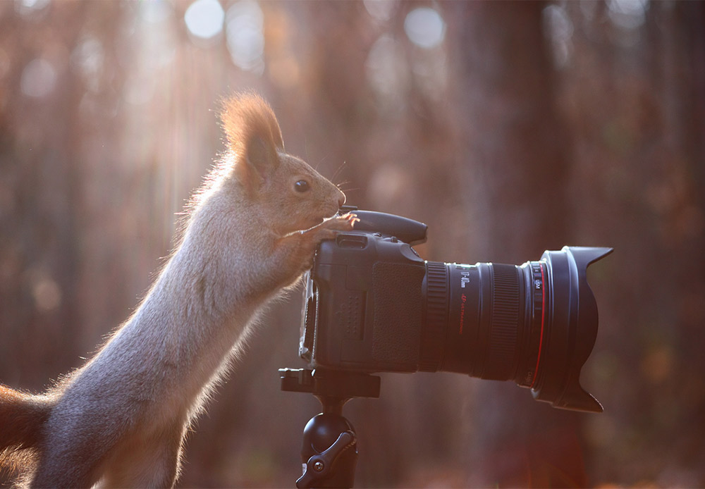 Selfies are part-and-parcel of the modern world, even if you happen to be a squirrel.