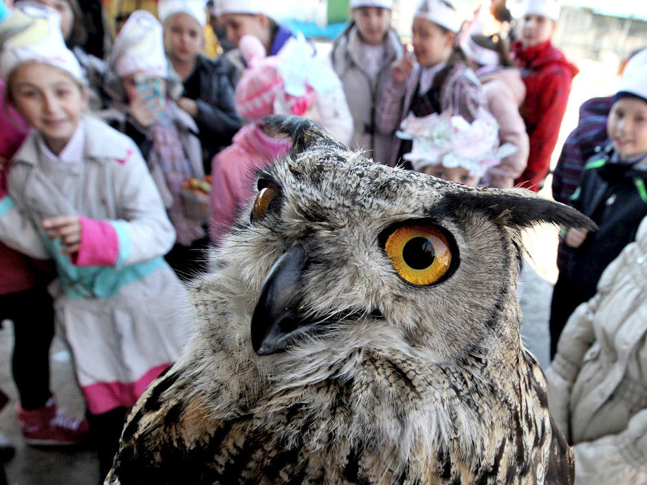 An eagle-owl celebrates Bird Day at the Sad Gorod (Garden City) private zoo in Vladivostok.