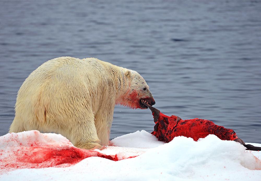 Postoje vrste koje nestaju i koje su zaštićene vladom.