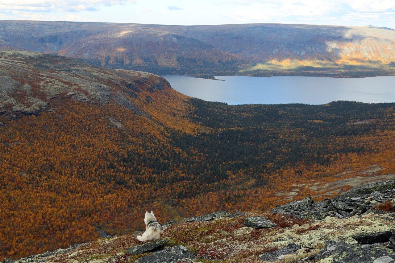 Seekor anjing husky sedang mengagumi keindahan alam Rusia.