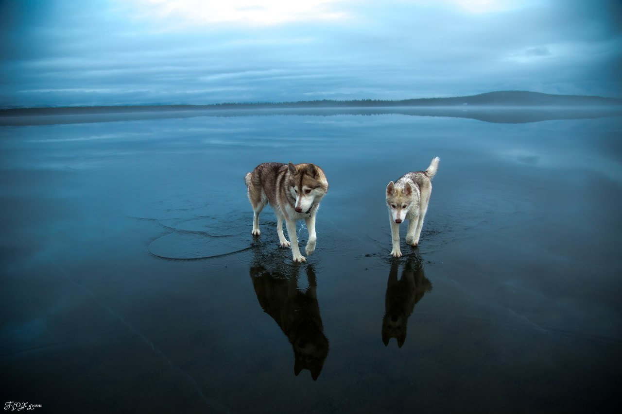 Foto-foto menakjubkan ini difoto oleh seorang fotografer amatir dengan nama julukan (nickname) Fox Grom di Danau Imandra, Murmanskaya Oblast.