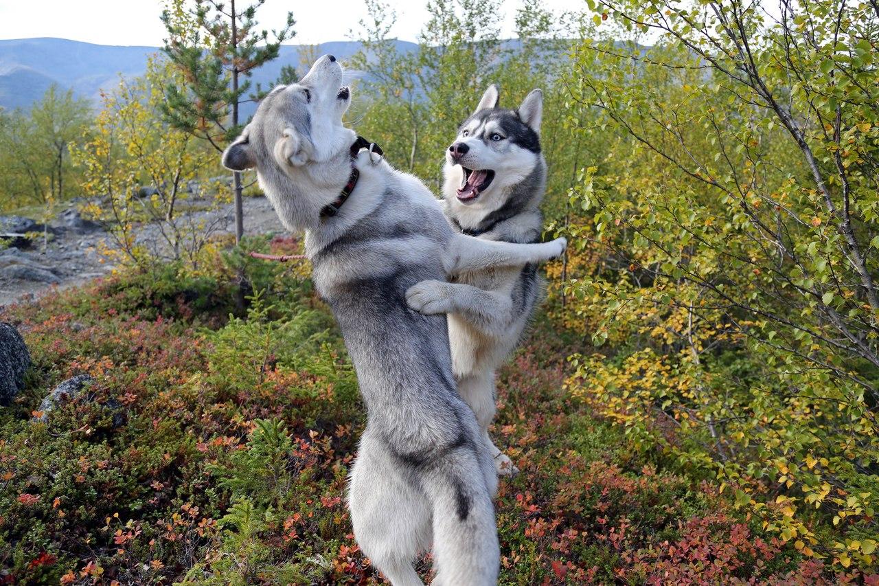 Mereka bisa menari.